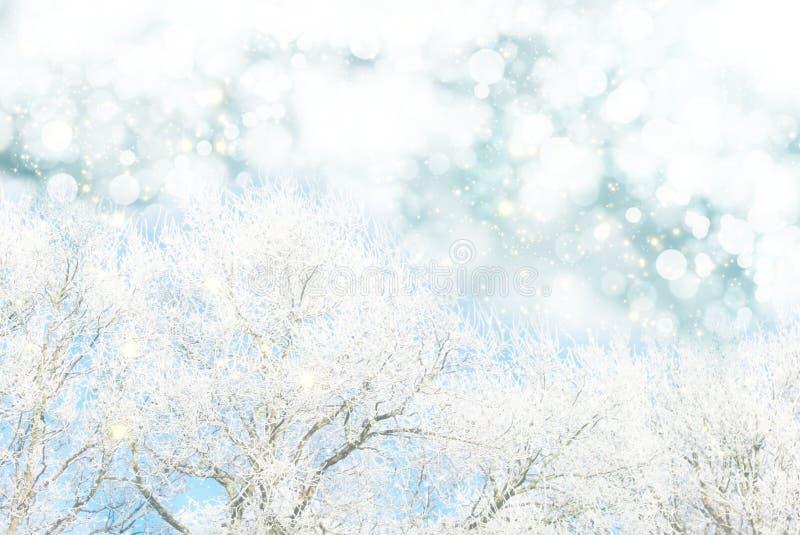 Fondo bianco del bokeh della neve e dell'albero immagine stock libera da diritti