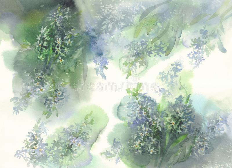 Fondo bianco dell'acquerello del giacinto royalty illustrazione gratis