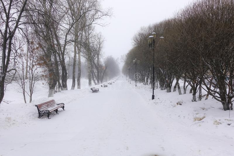 Fondo bianco di Snowy con un vicolo nel boschetto Il percorso fra gli alberi di inverno con la brina durante precipitazioni nevos immagine stock