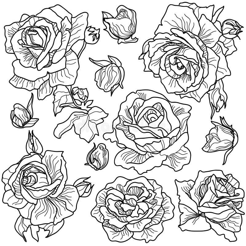 fondo bianco di vettore e rose in bianco e nero royalty illustrazione gratis