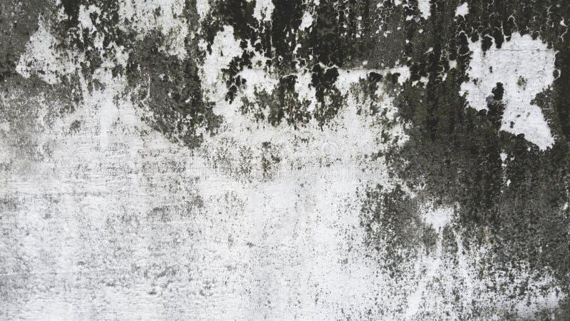 Fondo bianco e grigio di lerciume del cemento della parete di struttura fotografia stock