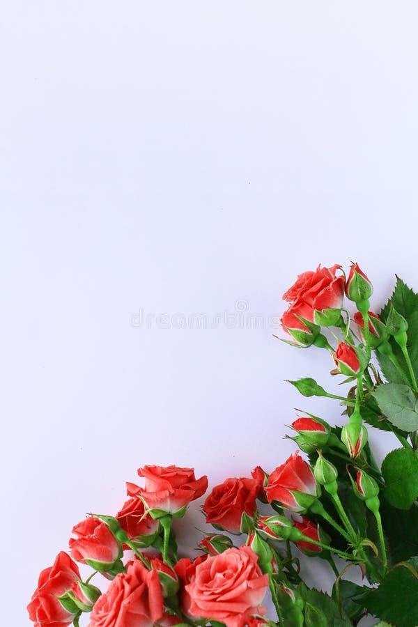 Fondo bianco flatlay dei fiori delle rose di nozze immagine stock libera da diritti