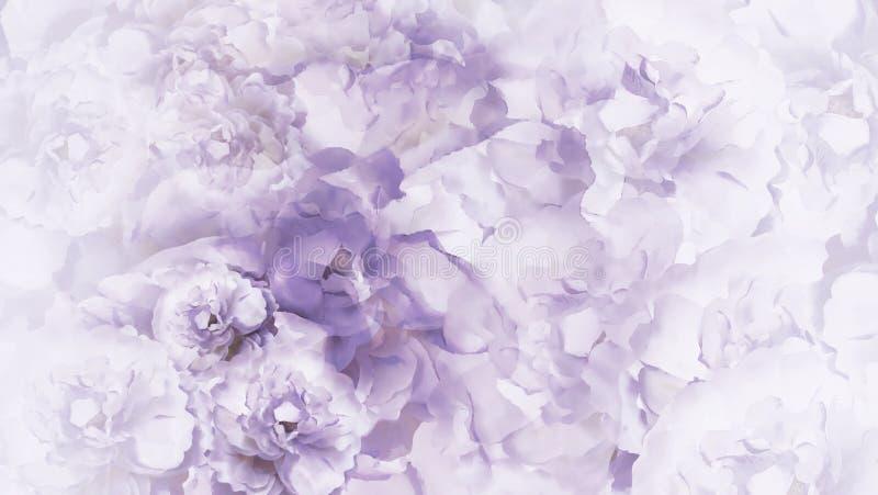 Fondo bianco porpora floreale l'annata bianca porpora fiorisce le peonie collage floreale Composizione nel fiore immagine stock