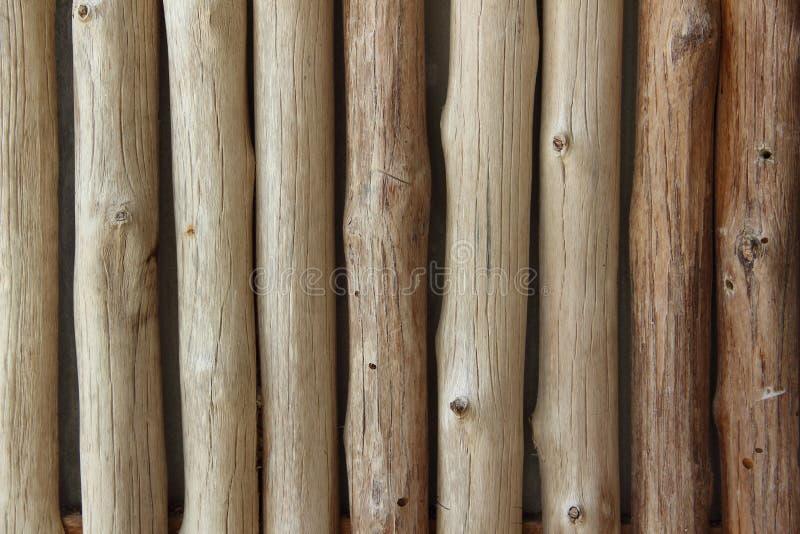 Fondo bien del eucalipto fotografía de archivo