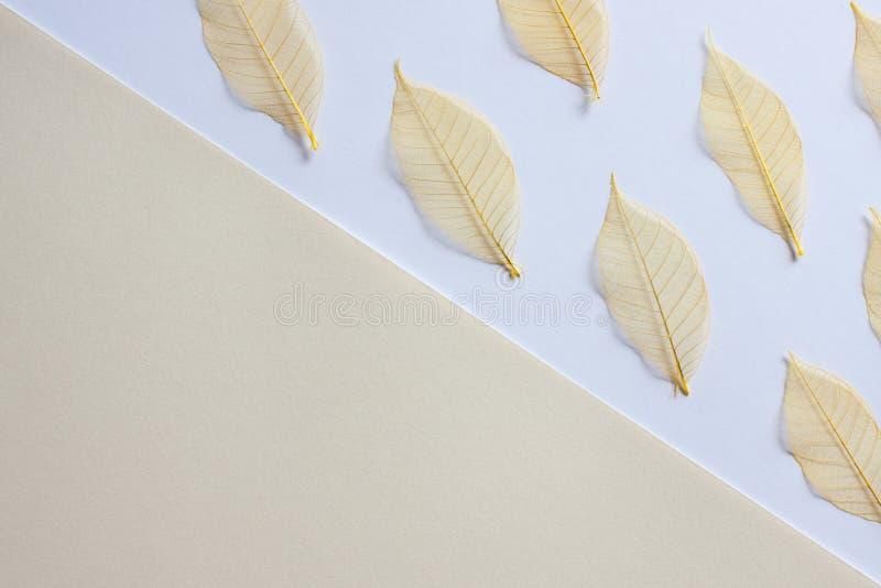 Fondo blanco amarillo en colores pastel fotografía de archivo libre de regalías