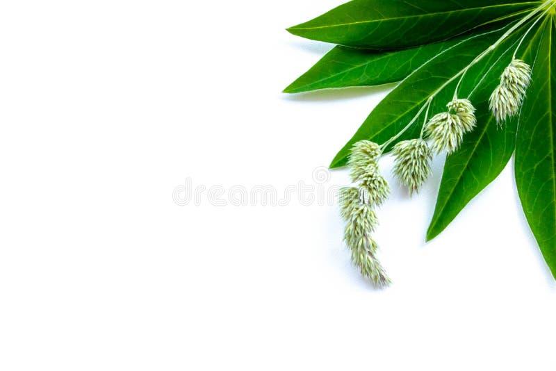 Fondo blanco de la postal e hierba verde de las hojas imágenes de archivo libres de regalías