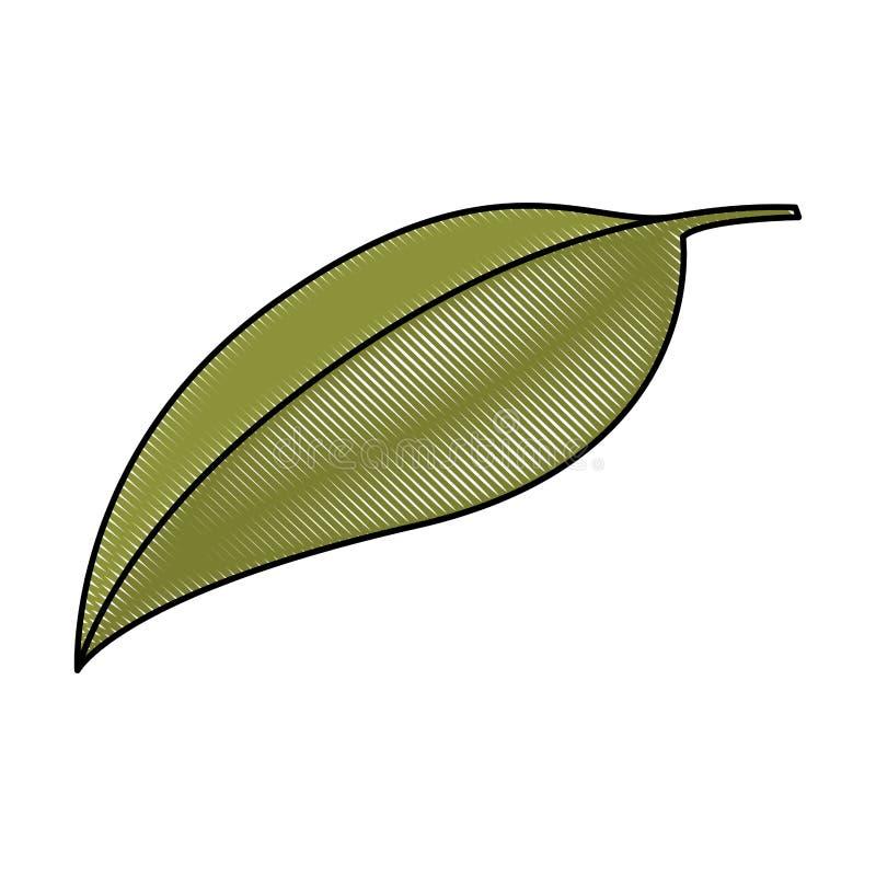 Fondo blanco de la silueta coloreada del creyón de la hoja verde de la cereza stock de ilustración