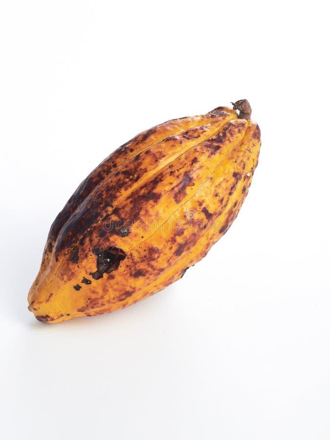 Fondo blanco del cacao de la vaina fresca de la fruta fotografía de archivo libre de regalías