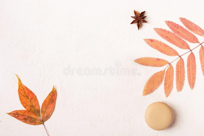 Fondo blanco del otoño de Minimalistic con las galletas de los macarrones y las hojas coloridas imagen de archivo