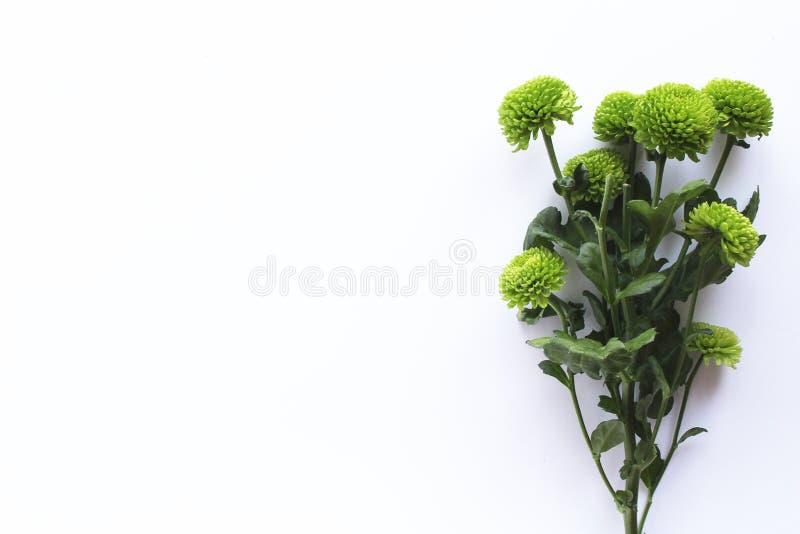 Fondo blanco del ramo verde de las flores frescas fotografía de archivo