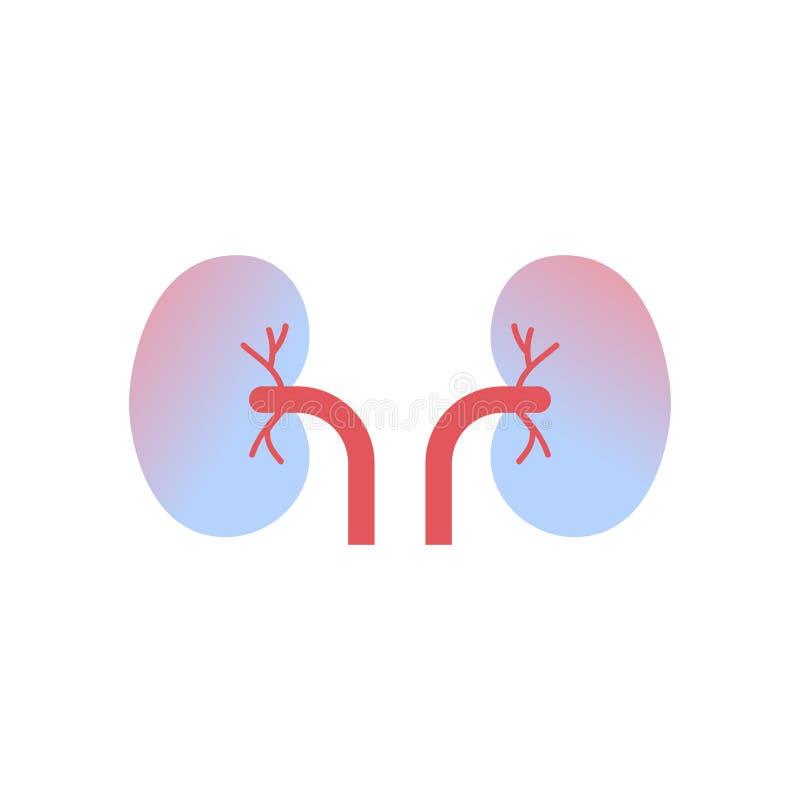 Fondo blanco del sistema renal médico del concepto de la atención sanitaria de la anatomía del órgano humano del icono de los riñ ilustración del vector