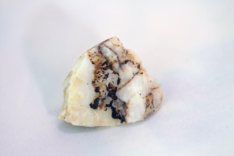 Fondo blanco, piedra fósil fotos de archivo