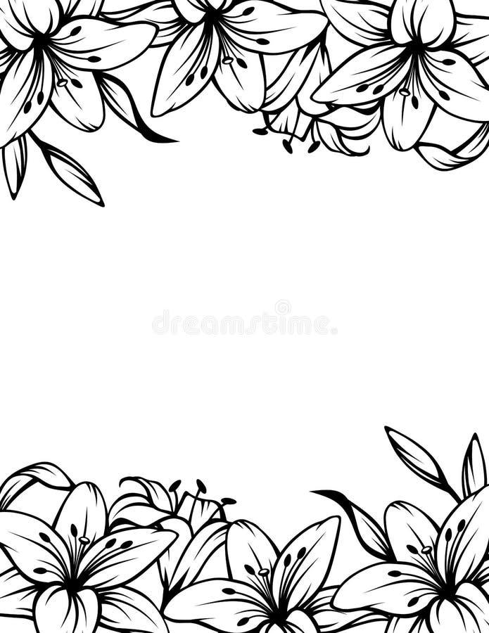Fondo blanco y negro con las flores del lirio Ilustración del vector ilustración del vector