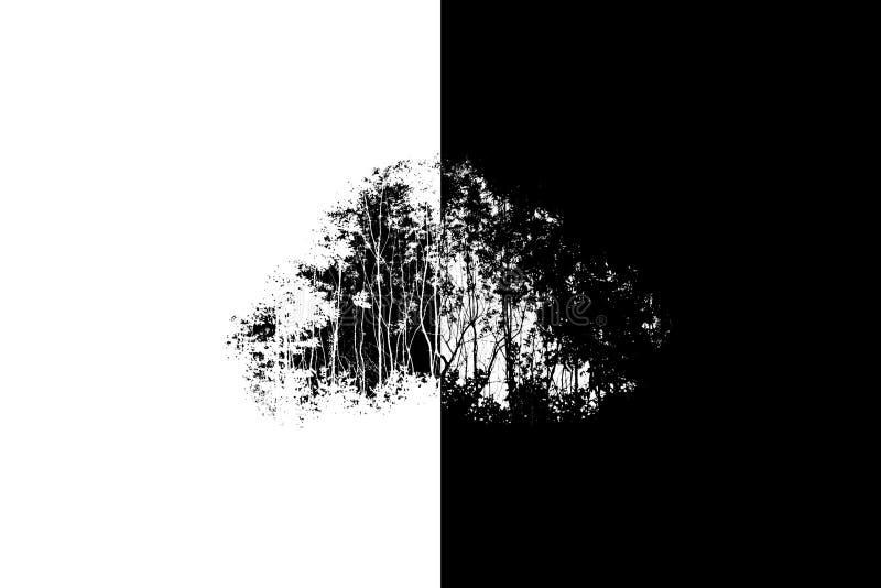 Fondo blanco y negro de los silnouettes de los árboles foto de archivo libre de regalías