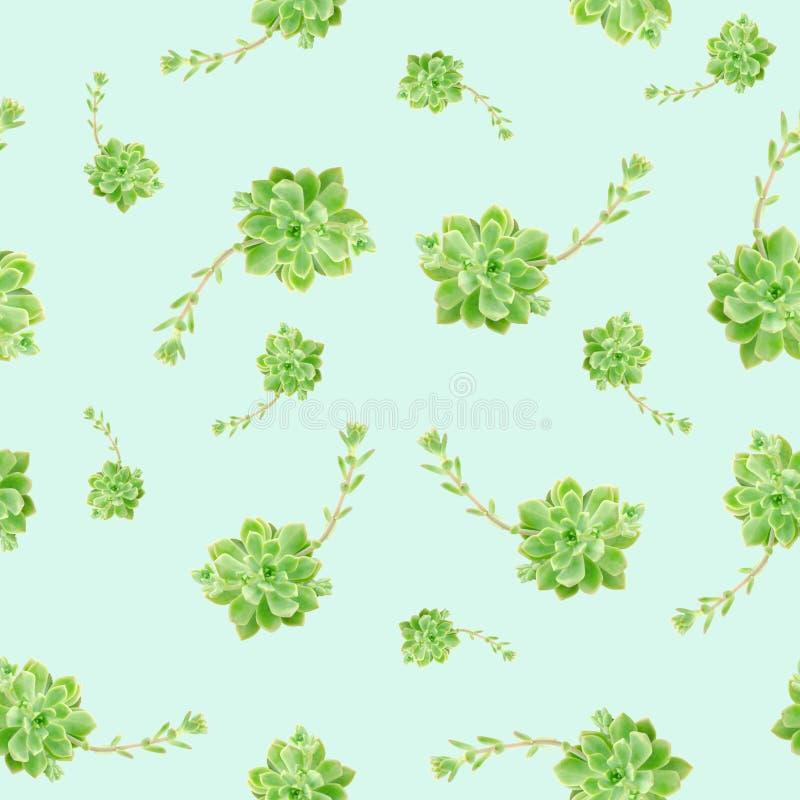 Fondo blu del modello succulente verde della pianta immagine stock libera da diritti