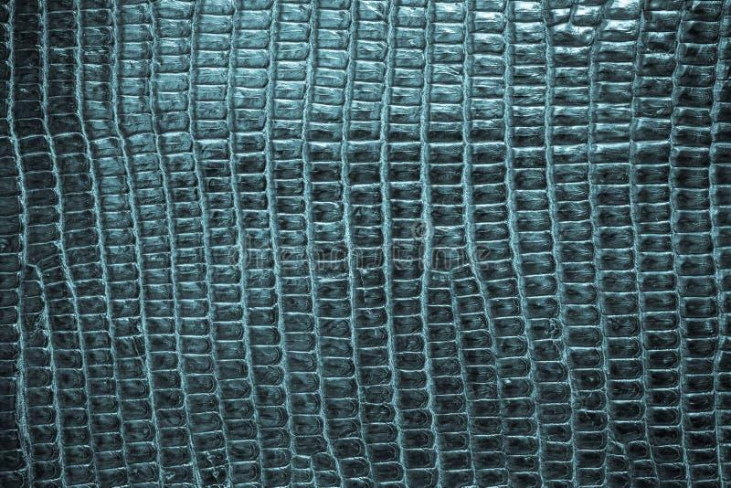 Fondo blu di struttura del cuoio del rettile fotografie stock