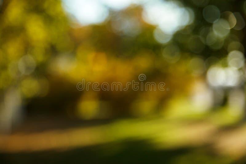 Fondo borroso extracto de la naturaleza ?rboles forestales, d?a soleado, resplandor del sol, bokeh Contexto Defocused para su dis fotografía de archivo