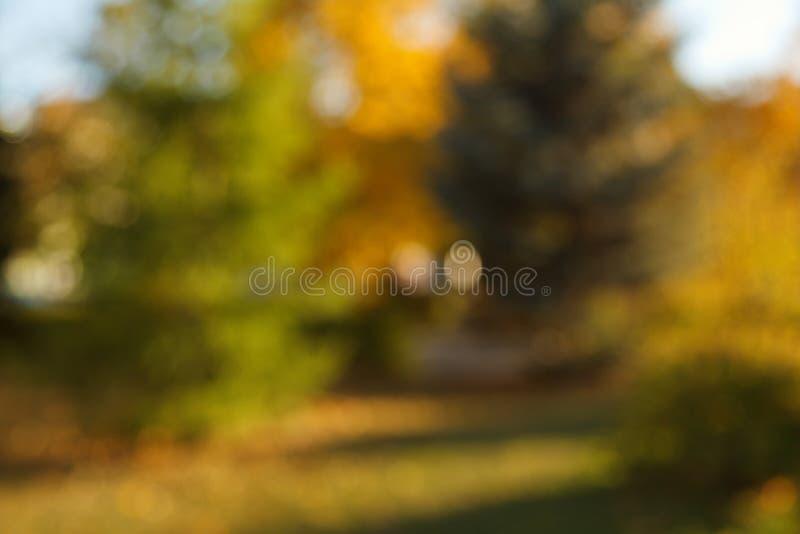 Fondo borroso extracto de la naturaleza ?rboles forestales, d?a soleado, resplandor del sol, bokeh Contexto Defocused para su dis fotos de archivo libres de regalías