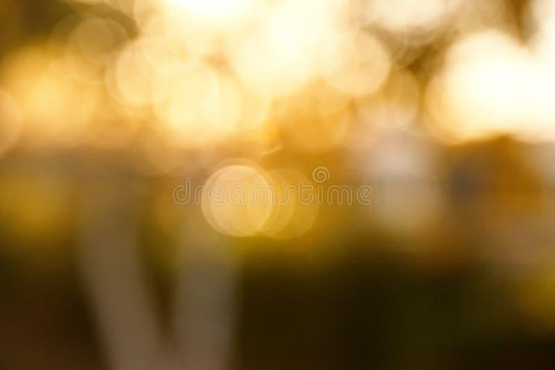 Fondo borroso extracto de la naturaleza ?rboles forestales, d?a soleado, resplandor del sol, bokeh Contexto Defocused para su dis foto de archivo