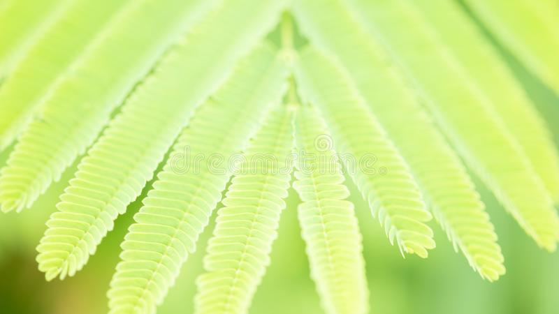 Fondo borroso verde de la hoja de la naturaleza imagenes de archivo