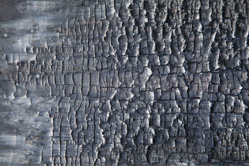 Fondo bruciato di legno immagine stock libera da diritti