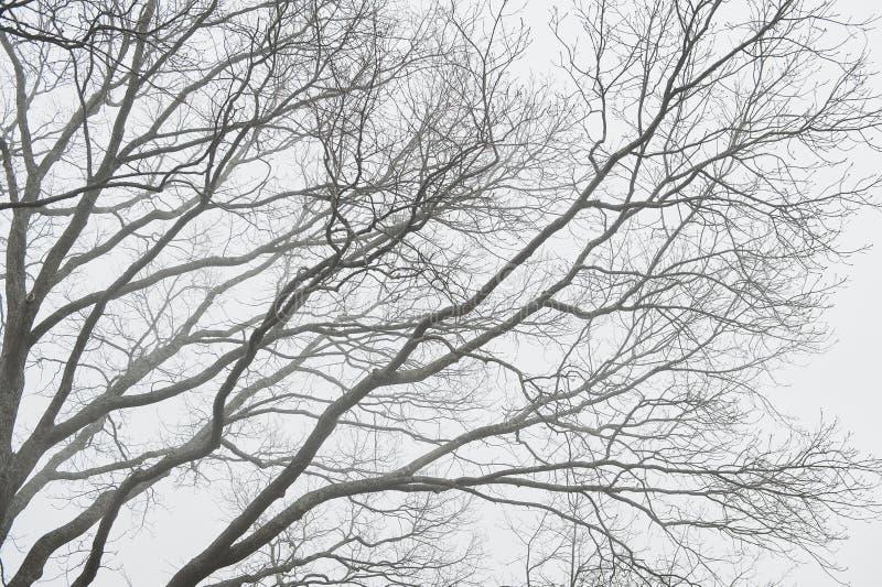 Fondo cambiante con la silueta de las ramas de árbol en niebla fotos de archivo