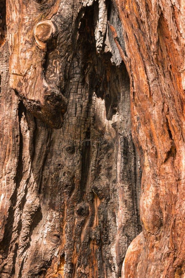 Fondo chamuscado del tronco de árbol de pino foto de archivo libre de regalías