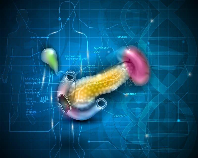 Fondo científico del páncreas ilustración del vector
