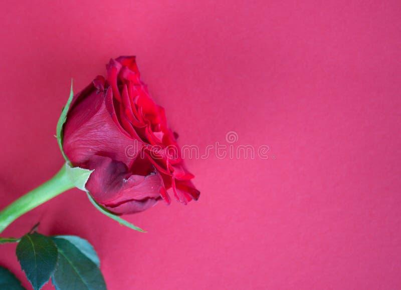 Fondo color de rosa del rojo imagen de archivo