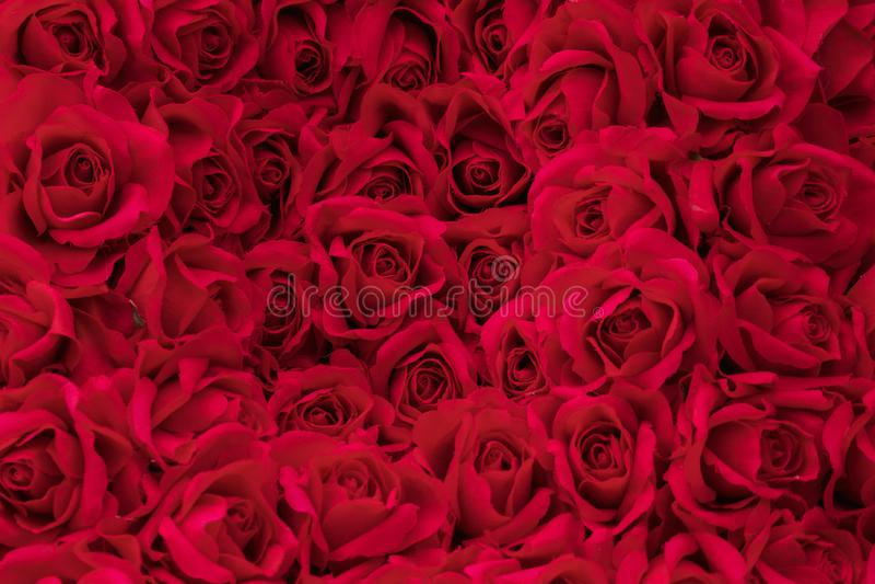Fondo color de rosa rojo, flor falsa imagenes de archivo