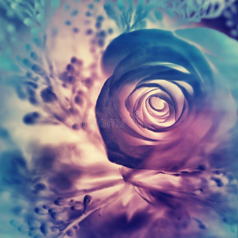 Fondo color de rosa soñador foto de archivo libre de regalías