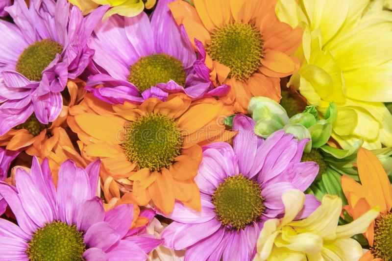 Fondo colorido brillante de margaritas púrpuras y anaranjadas y flores amarillas brillantes - alegres y diversión imagenes de archivo