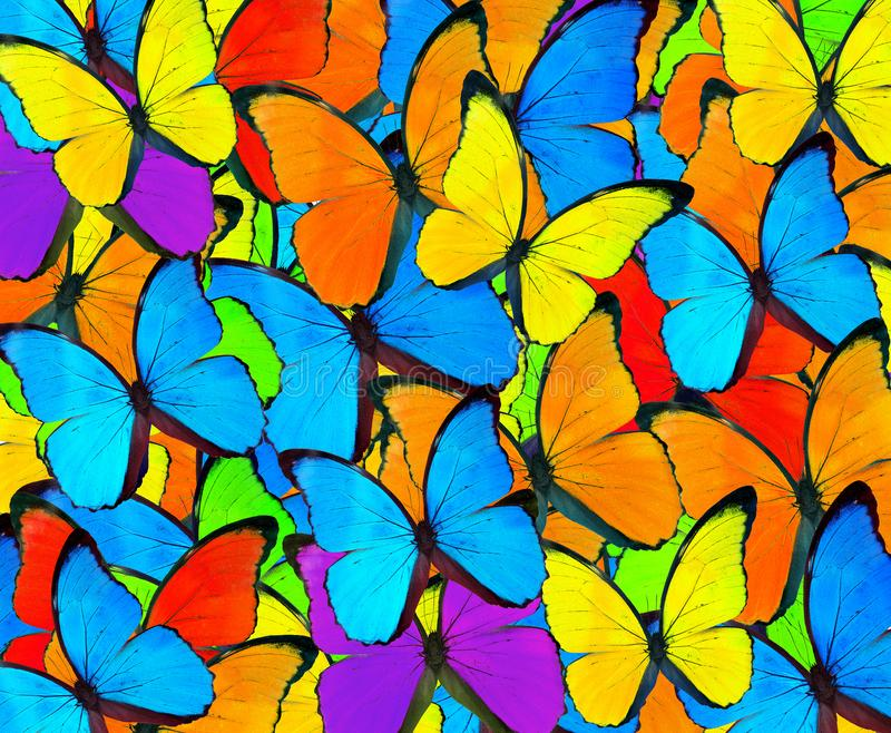 Fondo colorido de la mariposa de la mezcla hermosa Mota mezclada colorida foto de archivo