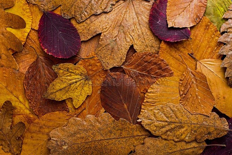 Fondo colorido de las hojas de otoño Autumn Concept Wallpaper imágenes de archivo libres de regalías