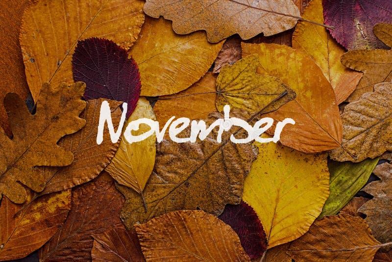 Fondo colorido de las hojas de otoño Papel pintado del concepto de noviembre foto de archivo libre de regalías