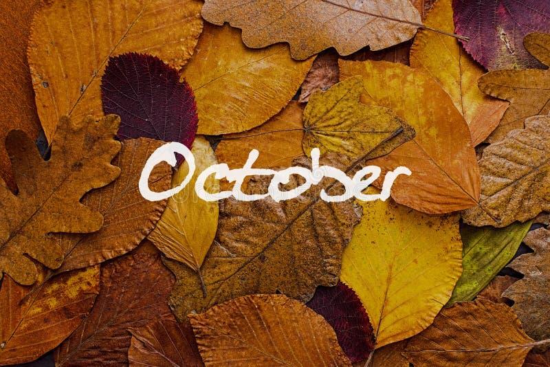 Fondo colorido de las hojas de otoño Papel pintado del concepto de octubre foto de archivo