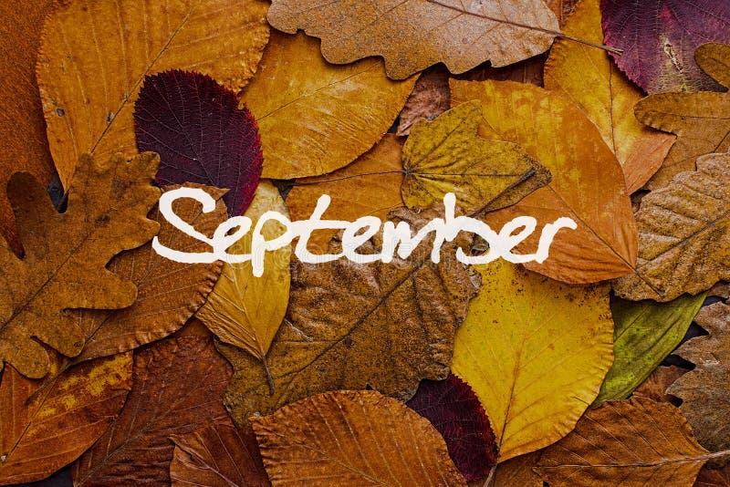 Fondo colorido de las hojas de otoño Papel pintado del concepto de septiembre fotografía de archivo libre de regalías