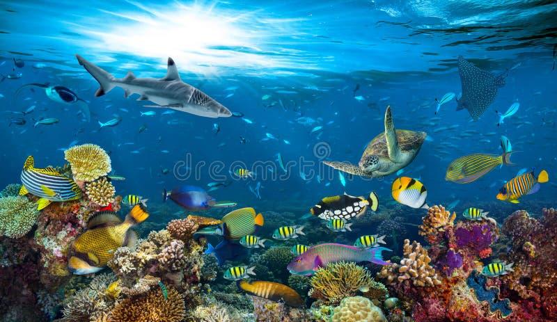 Fondo colorido de los pescados del arrecife de coral subacuático del paraíso foto de archivo