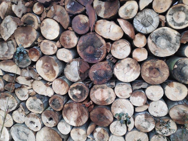Fondo colorido de troncos de árbol apilados fotografía de archivo libre de regalías