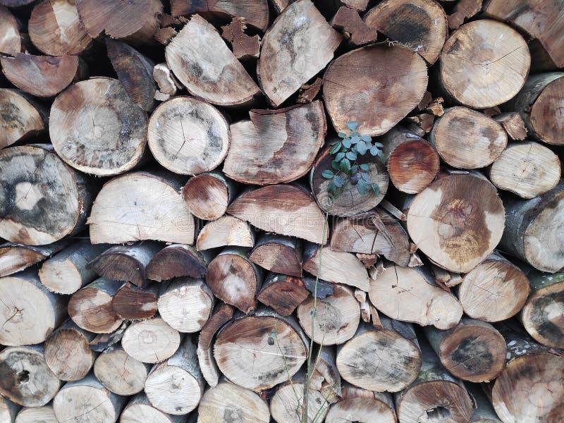 Fondo colorido de troncos de árbol apilados imágenes de archivo libres de regalías
