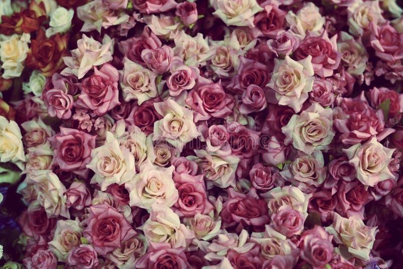 Fondo colorido hermoso de muchas rosas fotografía de archivo libre de regalías