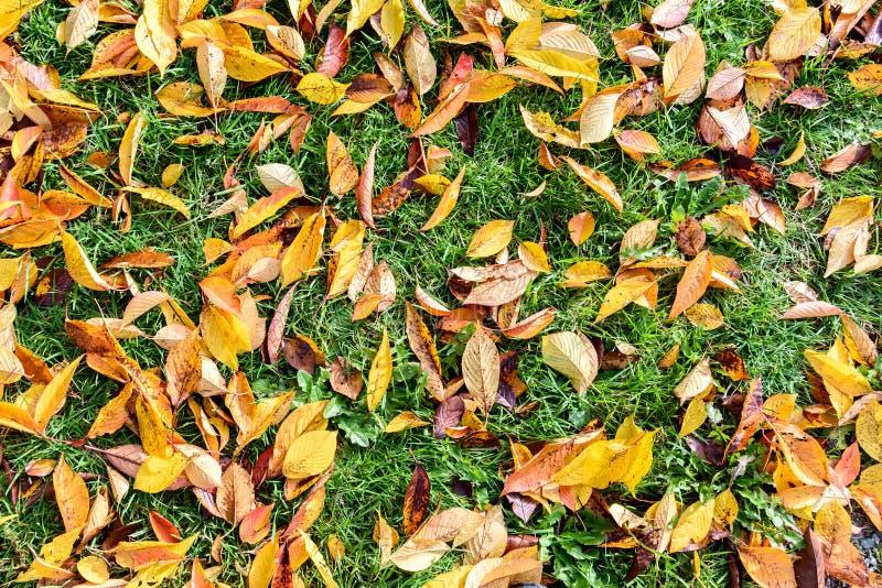 Fondo colorido y brillante hecho de las hojas de otoño caidas foto de archivo libre de regalías