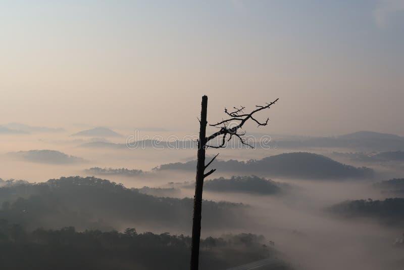 Fondo con aria fresca, luce magica e la foresta della copertura della nebbia densa nel plateau all'alba fotografie stock