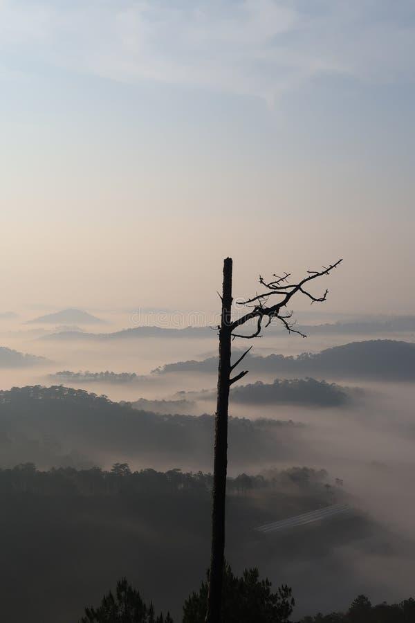 Fondo con aria fresca, luce magica e la foresta della copertura della nebbia densa nel plateau all'alba fotografia stock
