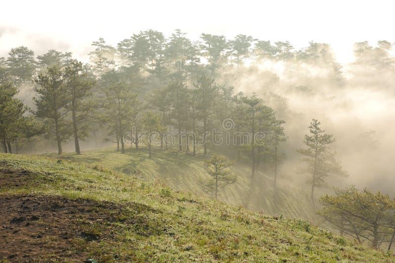 Fondo con aria fresca, luce magica e la foresta della copertura della nebbia densa nel plateau all'alba immagini stock libere da diritti