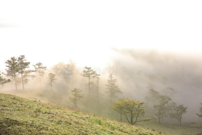 Fondo con aria fresca, luce magica e la foresta della copertura della nebbia densa nel plateau alla parte 1 di alba fotografia stock