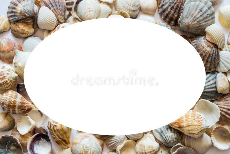 Fondo con diversas conchas marinas en los lados y aisladas en el centro del espacio blanco para el texto Foto grande imágenes de archivo libres de regalías