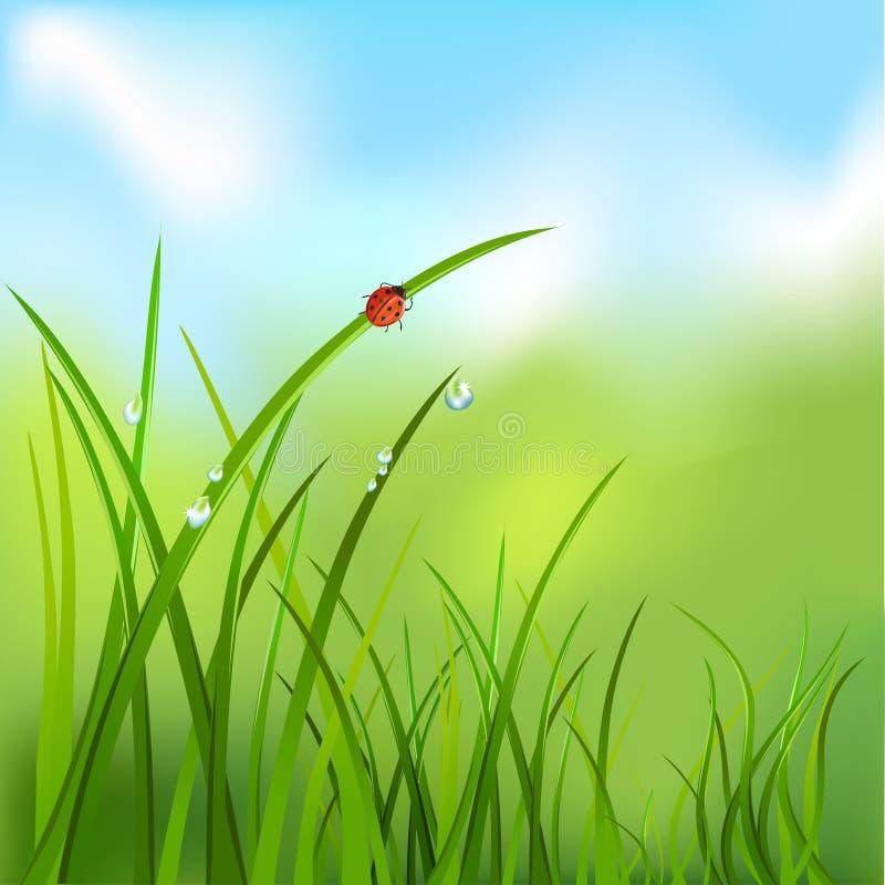 Fondo con erba, rugiada, coccinella illustrazione di stock