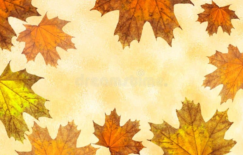 Fondo con follaje del otoño Fondo con las hojas de arce del color amarillo Ilustración libre illustration
