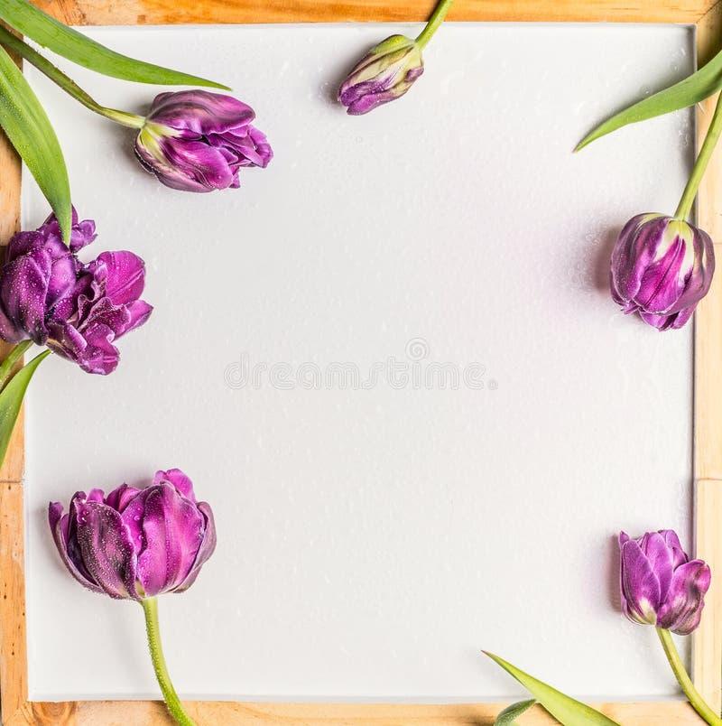 Fondo con i fiori e le gocce di acqua dei tulipani sulla lavagna bianca in bianco immagine stock libera da diritti